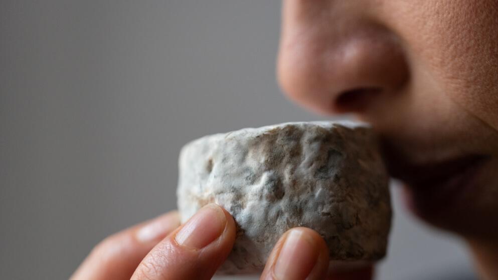 Apprendre à déguster un fromage